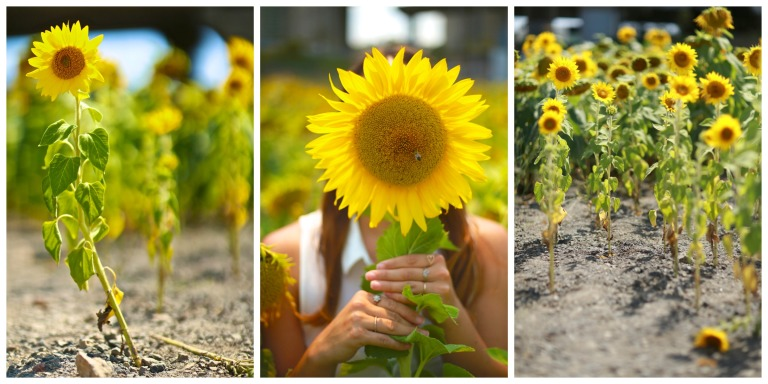 Sunflower Hello Kiki