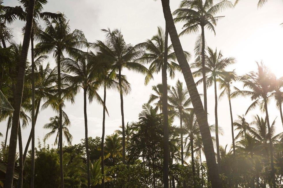 palm tree bali