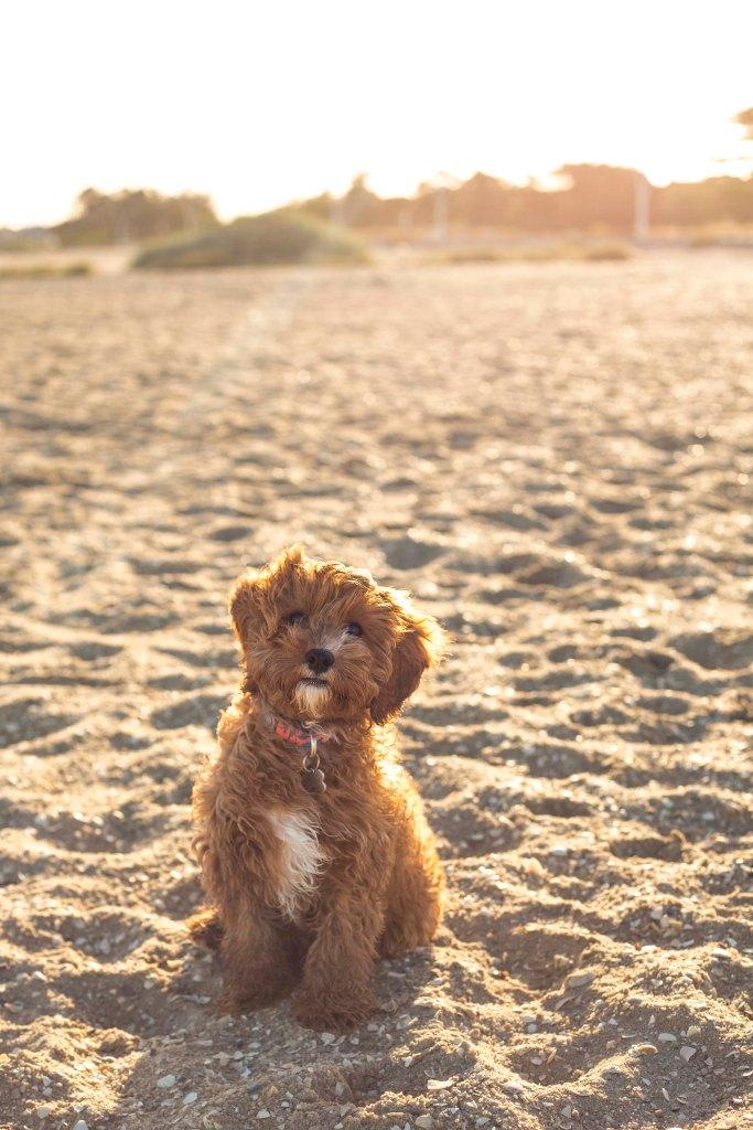 Harley_Beach147-2
