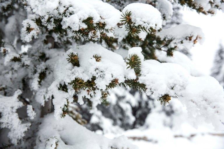 Winter_Canada_190