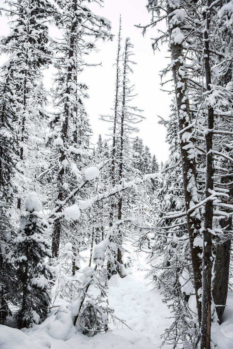 Winter_Canada_211